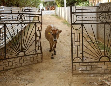 COW TRU GATE