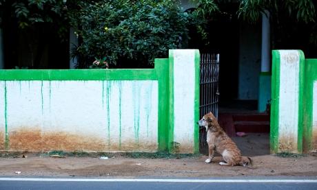 PATIENT DOG 1