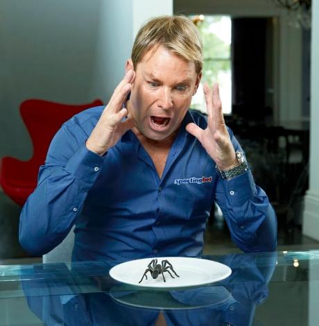 WARNE SPIDER TEASER B